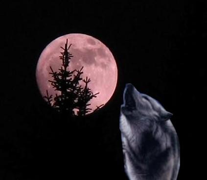 Blog de lukasloup : Lukas, coeur de loup, Episode 2