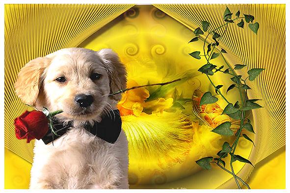 http://sd-4.archive-host.com/membres/images/213905367356762310/carte_simple/juillet_2011/neutre_chien.jpg
