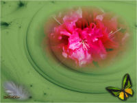 pps sabrina fleurs