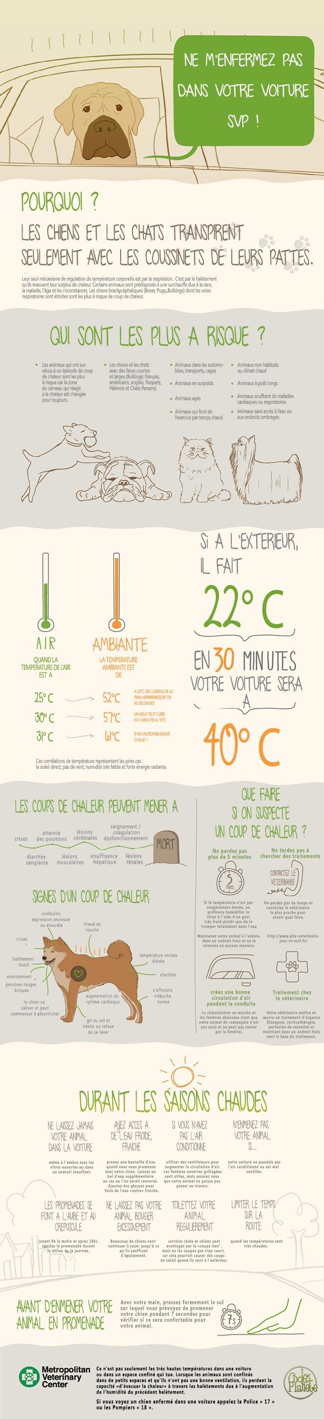 coup de chaleur chien et chat infographie