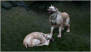 Les chiens égarés dragon age 2 dlc mota