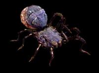 araignée DA2