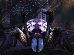 Reine des araignées