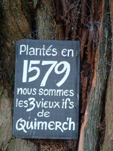 Les ifs de Quimerch (29) B6ee9950d98fa4f07656a27ee98c3c6c62290c94